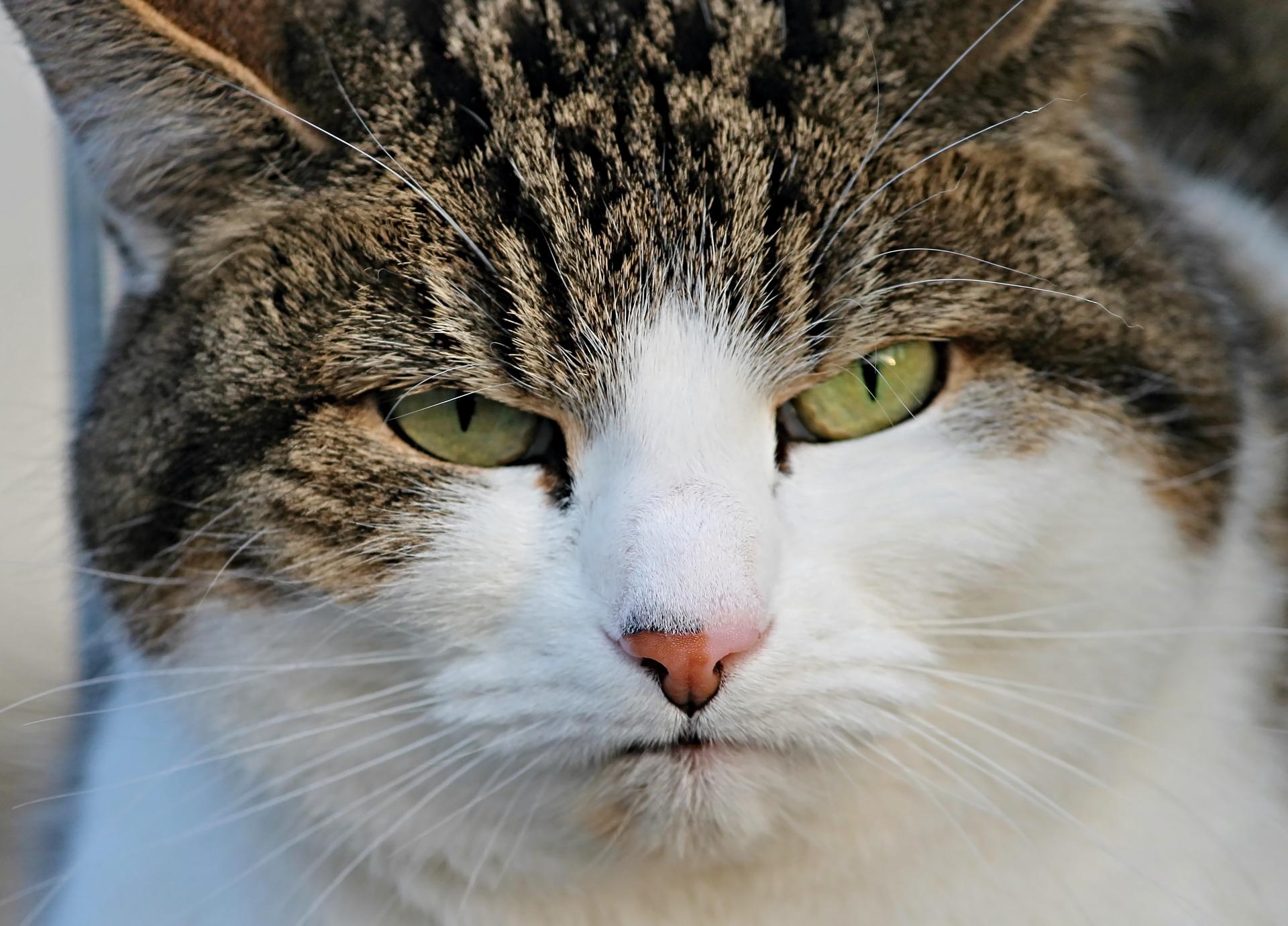 cat-3171124_1920
